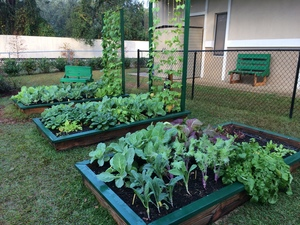 Tsms raised beds 2016